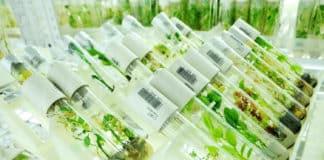 MSc & MTech Biosciences Junior Research Fellow Post @ ICRISAT