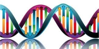 MSc & PhD Biosciences Research Vacancies @ BHU, Varanasi