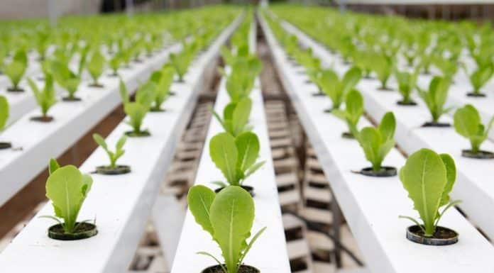 10+ JRF & SRF Positions @ Regional Plant Resource Centre