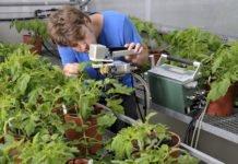 Msc Plant Science Jobs