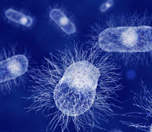 Researchers Identified Bacteria Have A Sense Of Touch Too!