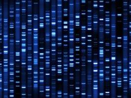 Biotech & Life Sciences MSc Project Position @ CSIR-IGIB