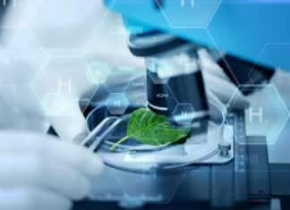 MSc Plant Sciences & Biotechnology Project Fellow Post @ NEHU