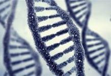 MSc Biosciences Research Position Available