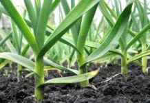 Soon Plants May Create their Own Fertilizers From Air