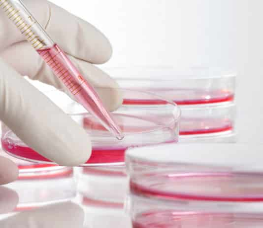 Order Online Cell Culture Reagents of Best Quality
