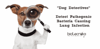 Dog Detectives Detect Pathogenic Bacteria Causing Lung Infection