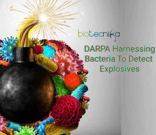 DARPA bacteria detect bombs