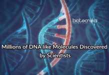 DNA Like Molecules