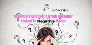 Mood Altering Brain Receptor