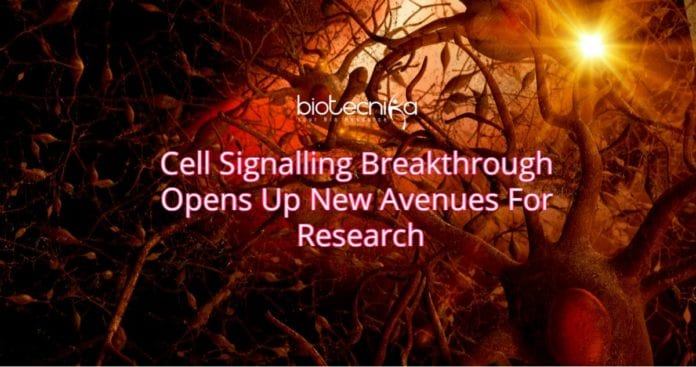 New Research on Cell signalling