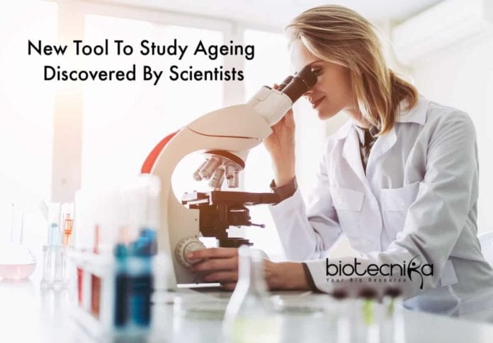 New Tool To Study Ageing