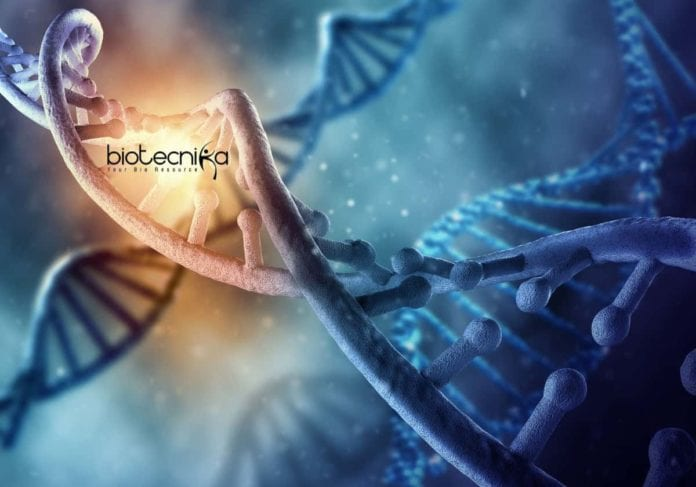 Therapeutic Biochemistry and Nanobiotechnology