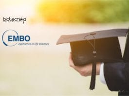 EMBO Young Investigator Programme