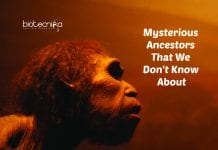 ghost DNA in West Africans