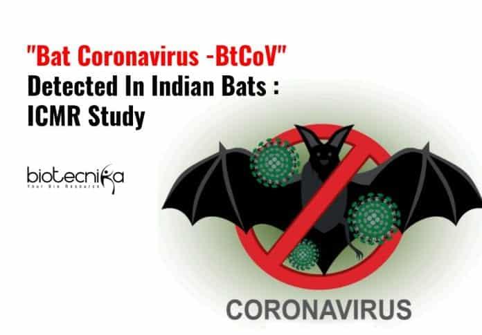 Coronavirus Found In Indian Bats