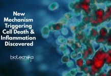 New mechanism in the pathogenesis of inflammatory diseases