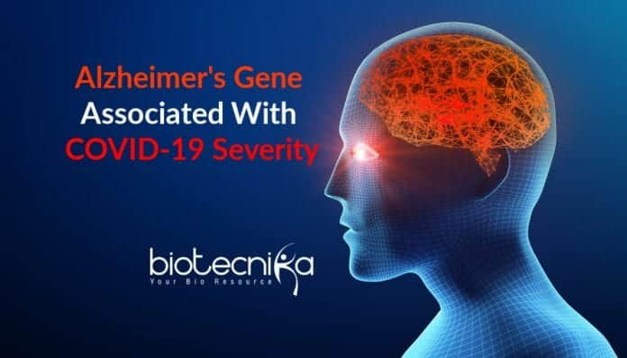 Alzheimers Gene associated with COVID-19