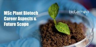 MSc Plant Biotechnology Career