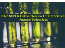 NBPGR Latest Research Jobs