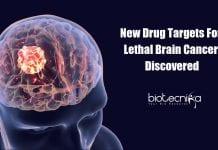 New Drug Targets for Glioblastoma