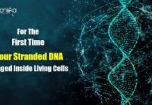 imaging quadruple helix DNA