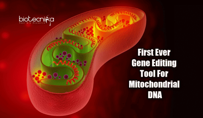 Mitochondrial genome editing tool