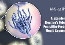Fleming's original Penicillium sequenced