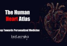 Human heart atlas