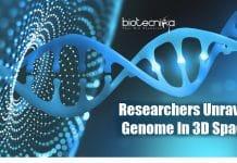 Researchers unravel genome