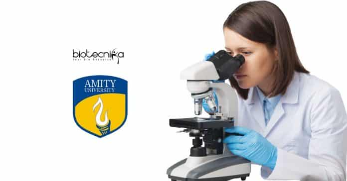 Amity Research Jobs