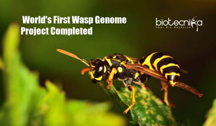 World First Wasp Genome Project Completed