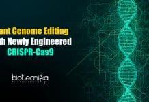 Plant genome editing