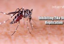 Inhibiting Zika virus