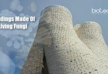Buildings Made From Living Fungus (1)