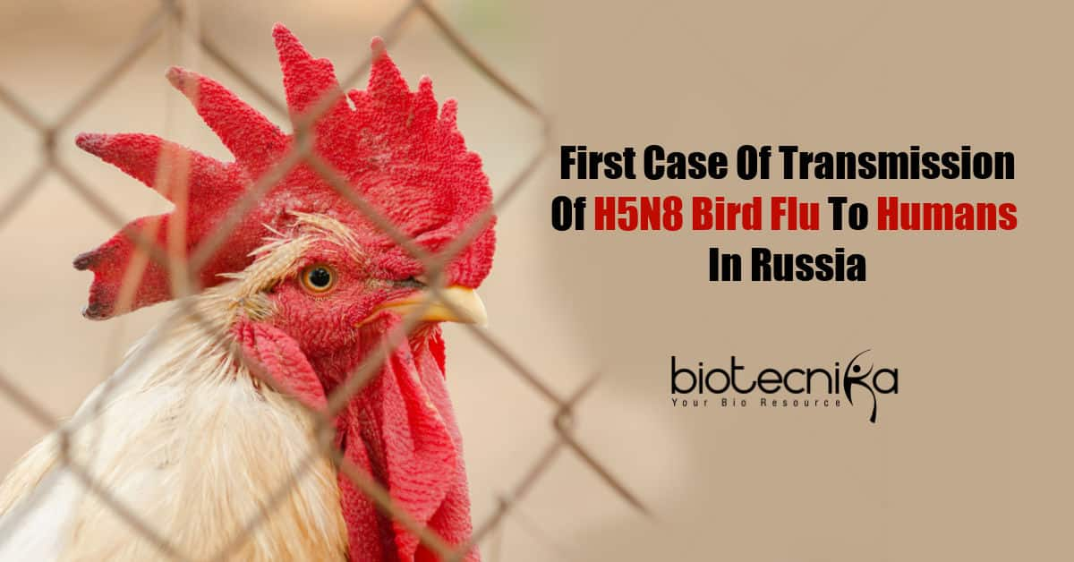 Russia Detects First Cases Of H5N8 Bird Flu In Humans - BioTecNika