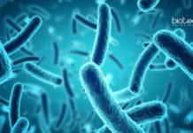 Sartorius Microbiology & Biotechnology