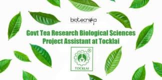 Tea Research Job Tocklai