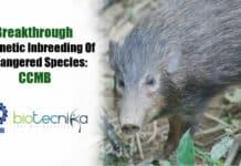 Breakthrough in genetic inbreeding